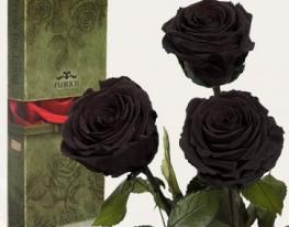 Три долгосвежие розы Черный Бриллиант в подарочной упаковке фото