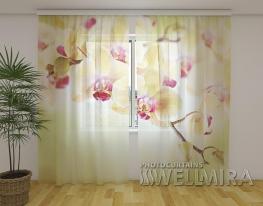 Шторы Золотая орхидея фото
