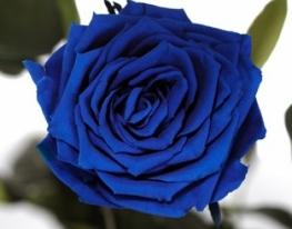 Долгосвежая роза Синий Сапфир в подарочной упаковке фото