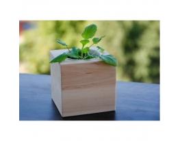 Набор для выращивания Экокуб Фиалка фото
