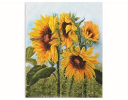 Картина на холсте по номерам Цветы Солнца фото