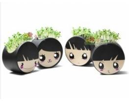 Керамический травянчик с семенами Мордашка подвесной фото