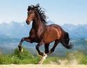 Пазл Лошадь на 1500 элементов фото 1