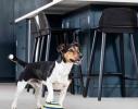 Игрушка диск для собак с пищащим звуком Гав планер фото 2