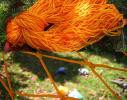 Гамак сетка Оранжевый фото 2
