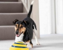 Игрушка диск для собак с пищащим звуком Гав планер фото 1
