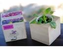 Набор для выращивания Экокуб Фиалка фото 3