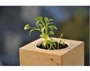 Набор для выращивания Экокуб Кинза фото 1