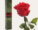 Долгосвежая роза Алый Рубин в подарочной упаковке фото 1