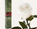 Долгосвежая роза Белый Бриллиант в подарочной упаковке фото 1