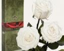 Три долгосвежие розы Белый Бриллиант в подарочной упаковке фото