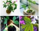 Набор для выращивания Экокуб Мимоза стыдливая фото 3