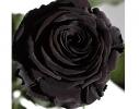 Долгосвежая роза - бутон Черный Бриллиант фото