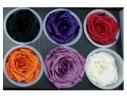 Долгосвежая роза - бутон Черный Бриллиант фото 1