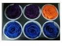 Долгосвежая роза - бутон Синий Сапфир фото 1