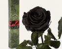 Долгосвежая роза Черный Бриллиант в подарочной упаковке фото 2