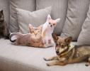 Подушка Лучшие друзья фото 1