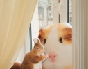 Подушка Белочка фото 1