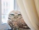 Подушка Мудрая сова фото 1