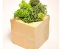 Набор для выращивания Экокуб Мох фото 3