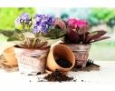 Набор для выращивания Экокуб Фиалка фото 1