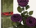 Долгосвежая роза Королевская в подарочной упаковке фото 1