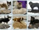 Фурминатор для кошек и собак 4,5 см фото 1