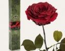 Долгосвежая роза Багровый Гранат в подарочной упаковке фото 2