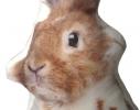Подушка Кролик Толик фото 3