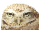 Подушка Мудрая сова фото 3