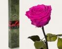 Долгосвежая роза Малиновый Родолит в подарочной упаковке фото 4