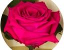 Долгосвежая роза Малиновый Родолит в подарочной упаковке фото 2