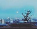 Набор для выращивания Экокуб Голубая Ель фото 7