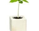 Набор для выращивания Экокуб Гранат фото 5