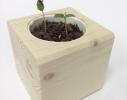 Набор для выращивания Экокуб Хурма фото 2