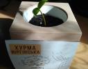 Набор для выращивания Экокуб Хурма фото 3