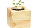 Набор для выращивания Экокуб Лаванда фото 1