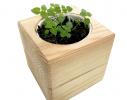 Набор для выращивания Экокуб Мелисса фото 1