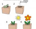 Набор для выращивания Экокуб Сирень фото 3