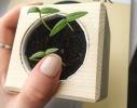 Набор для выращивания Экокуб Жгучий красный перец фото 2
