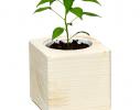 Набор для выращивания Экокуб Жгучий красный перец фото 3