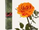 Долгосвежая роза Оранжевый Цитрин 7карат в подарочной упаковке фото 1