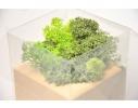 Набор для выращивания Экокуб Мох фото 4