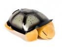 Проектор звездного неба Night Turtle Черепаха музыкальная Бежевая