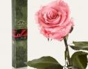 Долгосвежая роза Розовый Кварц в подарочной упаковке фото 1