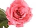 Букет долгосвежих роз Розовый Кварц фото 1