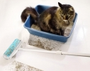 Набор силиконовых щеток - валиков для уборки Schticky фото 2