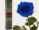 Долгосвежая роза Синий Сапфир в подарочной упаковке фото 1
