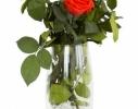 Три долгосвежих розы Синий Сапфир в подарочной упаковке фото 3