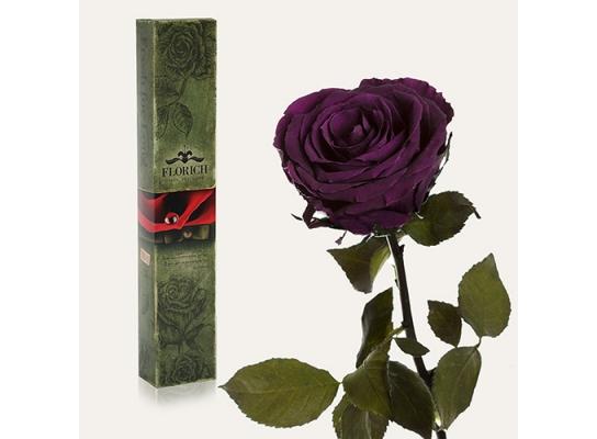 Долгосвежая роза Королевская в подарочной упаковке фото